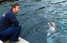 Tiergarten, Delphin Dolly